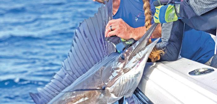 Recreational Fishing in Florida