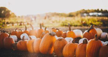 local pumpkin patches Central Florida